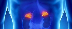 adrenal-glands-sm
